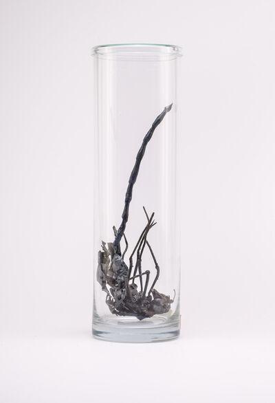Dana Meyer, 'Blauschweiflibelle (Epiophlebia hyacithum cauda) ', 2018