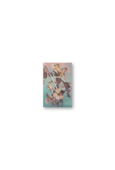Jason Seife, 'Floral Study 1 ', 2021