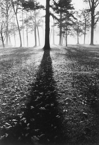 Alfred Eisenstaedt, 'Shadows in the Forest, Autumn, White Sulphur Springs, West Virginia', 1937