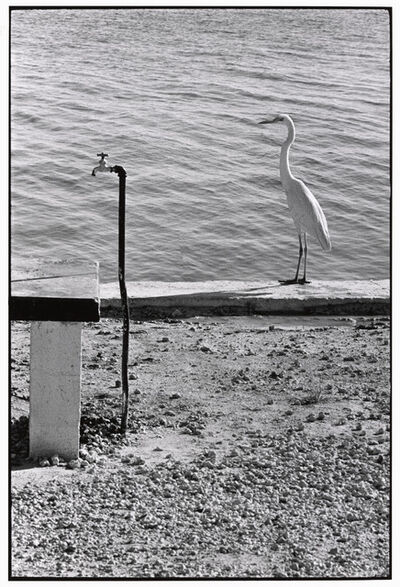Elliott Erwitt, 'Florida Keys, USA. ', 1968