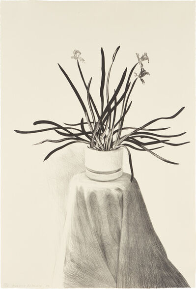 David Hockney, 'Potted Daffodils', 1980