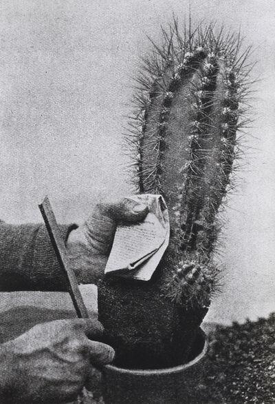 Alessandra Spranzi, 'Un cactus, una mano, un foglio (L'insieme è nero)', 2020