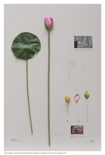 Alberto Baraya, 'Expedition Shanghai: Herbarium of Artificial Plants, Loto', 2012