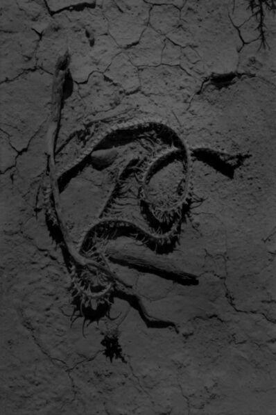 Adel Koleszar, 'Snake, San pedro torreon, Mexico', 2017