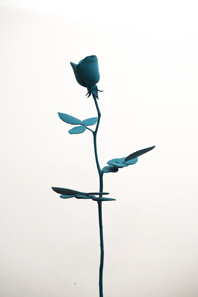 Julie Roch-Cuerrier, 'Peace Rose', 2019
