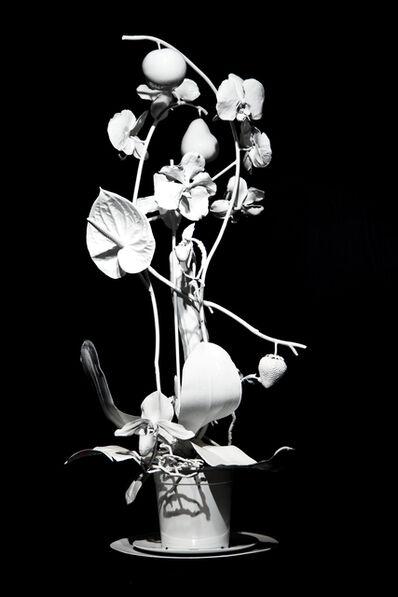 Marc Quinn, 'Antartic Nurseries of El Dorado', 2008