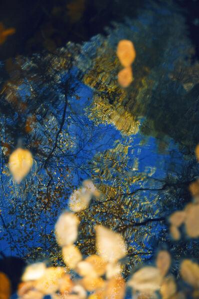 Erik Madigan Heck, 'Untitled, The Garden', 2017