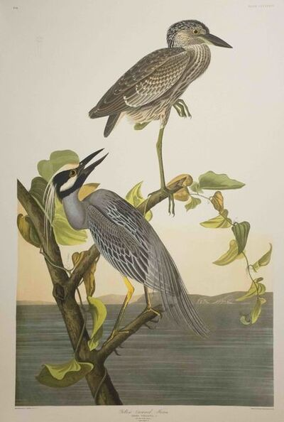 John James Audubon, 'Yellow-Crowned Heron, Edition Pl. 336', ca. 1999