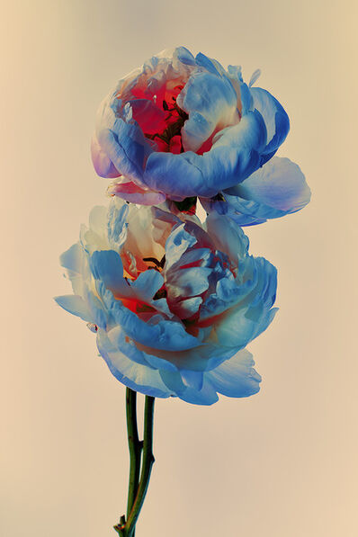 Billy Kidd, 'Painted Flowers n. 60', 2019