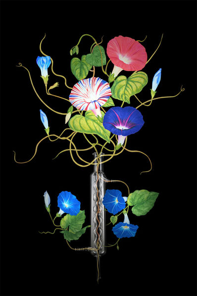 ShihFen Liu, 'Garden of Mullerian Ducts: Morning Glory', 2016