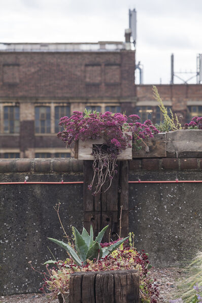 Derek Jarman, 'Derek Jarman's Garden', 2013