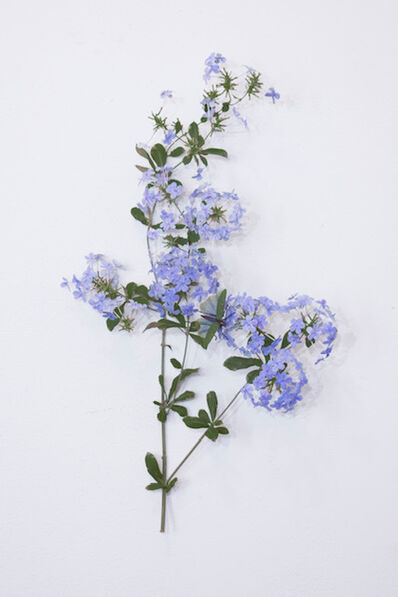 Carmen Almon, 'Plumbago with Spotted Grasshopper', 2019