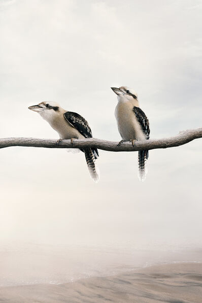 Alice Zilberberg, 'Carry On Kookaburra', 2020