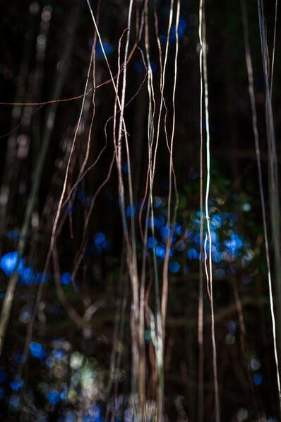 Laurie Lambrecht, 'Jungle Road 13-03-28', 2013