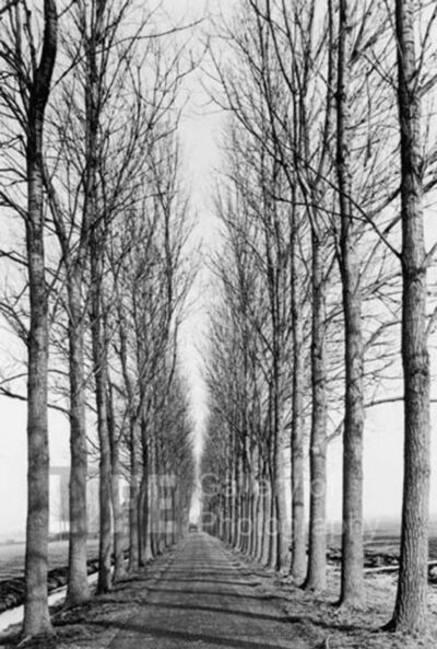 Alfred Eisenstaedt, 'Tree Lined Road, Delft, Holland', 1978