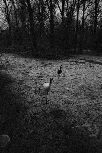 Wang Dongwei 王东伟, 'Two Cranes', 2014