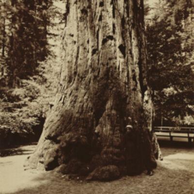 Carleton E. Watkins, 'Big Tree Felton (Redwood), Santa Cruz', 1880