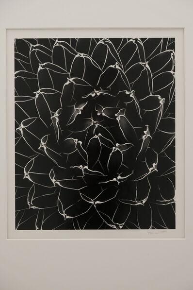 Don Worth, 'Succulent: Agave Victoriae- Reginae, Cuernavaca, Mexico', 1975