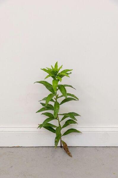 Tony Matelli, 'Weed 505', 2020