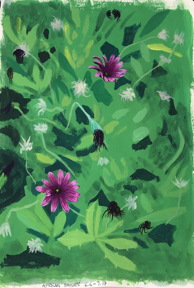 Cole Case, 'African Daisies 6.6-7.19', 2019