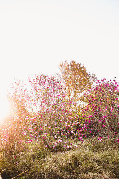 Rachael Baskerville, 'Magnolia Tree', 2019