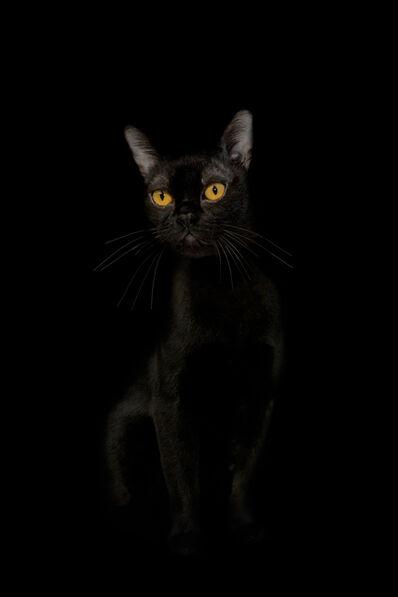 Netta Laufer, 'Cat- from the Black Beauty series', 2012-2016