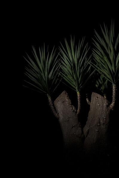 Giovanni Cocco, 'Plantarium 05', 2019