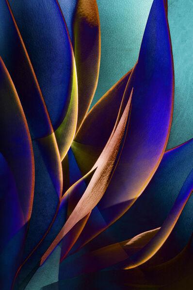 Ed Freeman, 'Plant Abstraction 16', 2017