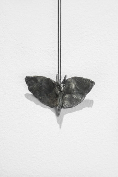 Klara Kristalova, 'Fly / Noctuid', 2017