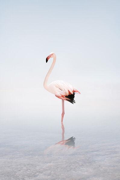 Alice Zilberberg, 'Wondering White Flamingo', 2020