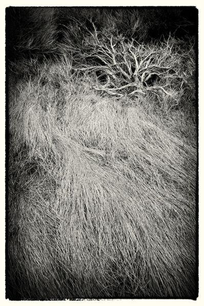Cara Weston, 'Bush and Grasses, Death Valley'