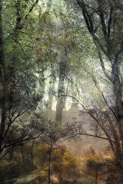 """Lisa Holden, 'Forest (from Series """"Constructed Landscapes"""")', 2010"""