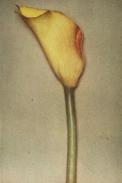 Sheila Metzner, 'Yellow Calla', 2000