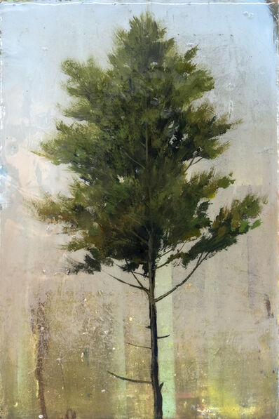 Peter Hoffer, 'Cedar'