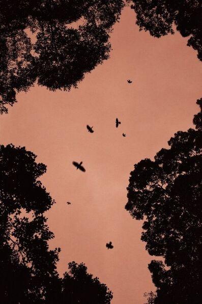 Maroesjka Lavigne, 'Birds (2), Fukuoka, Japan', 2015