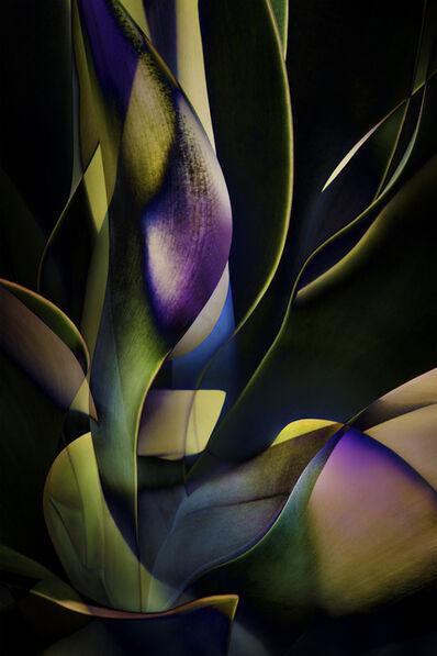 Ed Freeman, 'Plant Abstraction 13', 2017