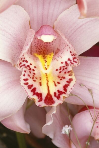 Nobuyoshi Araki, 'Flowers', 1985/2008