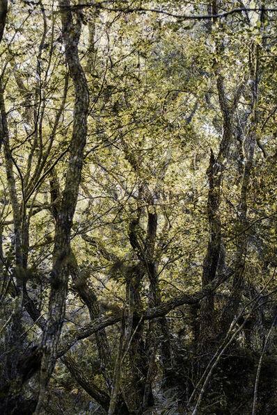 Santeri Tuori, 'Forest #29', 2016