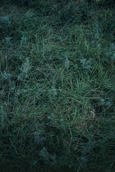 Feng Yan 封岩, '唐陵深草13 Tang Mausoleum Long Grass 13', 2018