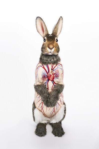 Deborah Simon, 'Flayed Rabbit: Cotton Tail', 2017