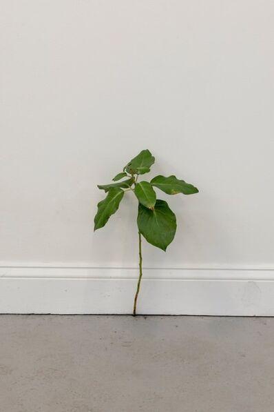 Tony Matelli, 'Weed 504', 2020