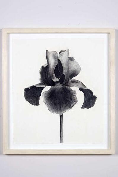 Aurel Schmidt, 'Untitled (Black Iris)', 2014