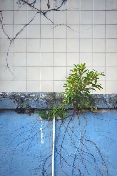 Romain Jacquet-Lagrèze, ''Wild Concrete #12' Hong Kong', 2013