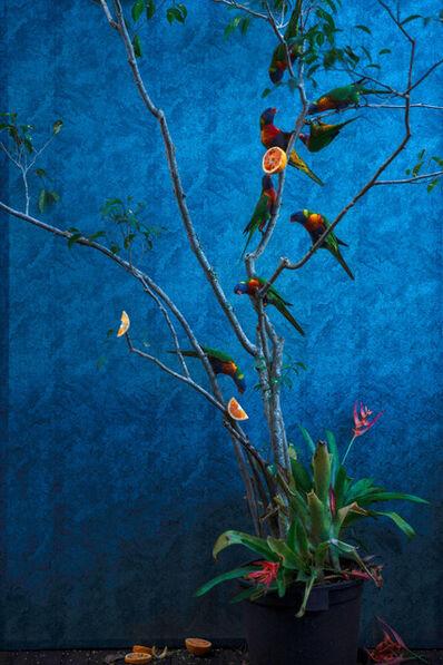 Itamar Freed, 'Itamr Freed, Orange Tree and Rainbow Lorikeets,', 2020