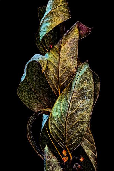 Ed Freeman, 'Plant Abstraction 17', 2017