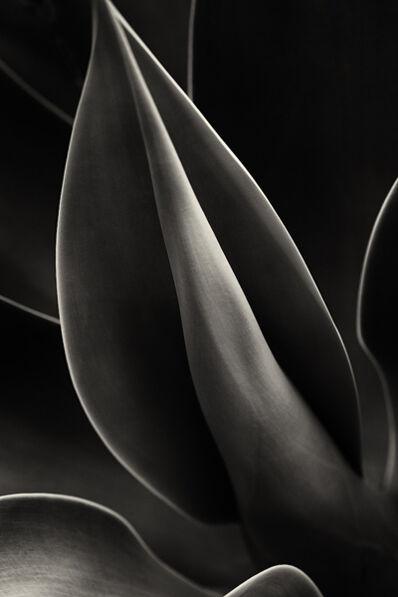 Cara Weston, 'Plant Curves, Moorea', 2014