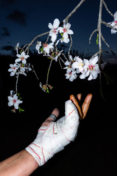 William Joe Josephs Radford, 'Almond Blossom', 2021