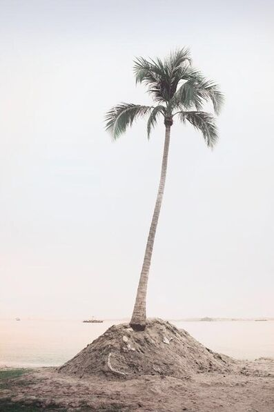 Robert Zhao Renhui, 'The oldest coconut tree in Singapore, 106 years old', 2016