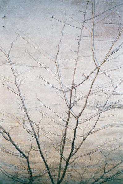 Frank Mädler, 'Baum an der Wand', 2016