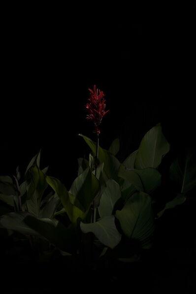 Giovanni Cocco, 'Plantarium 08', 2019